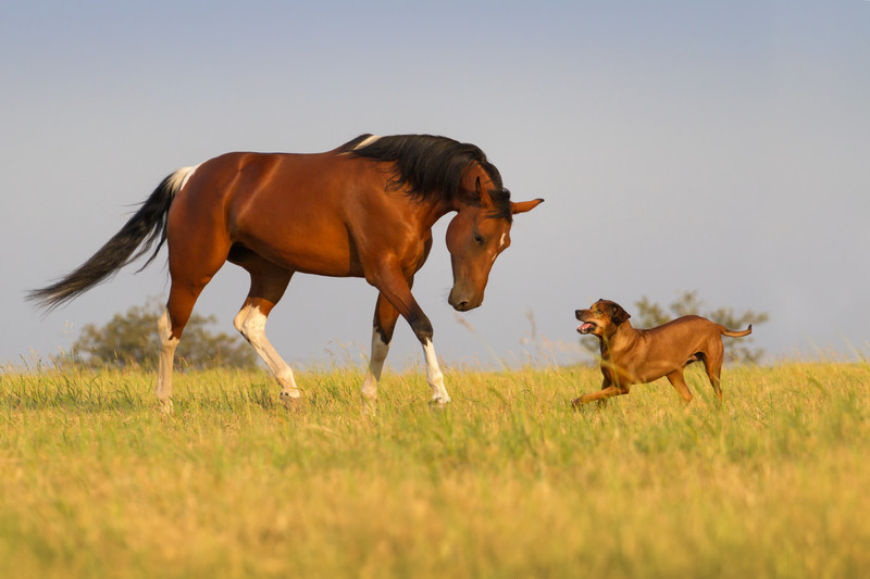 A horse and a dog in an open field.