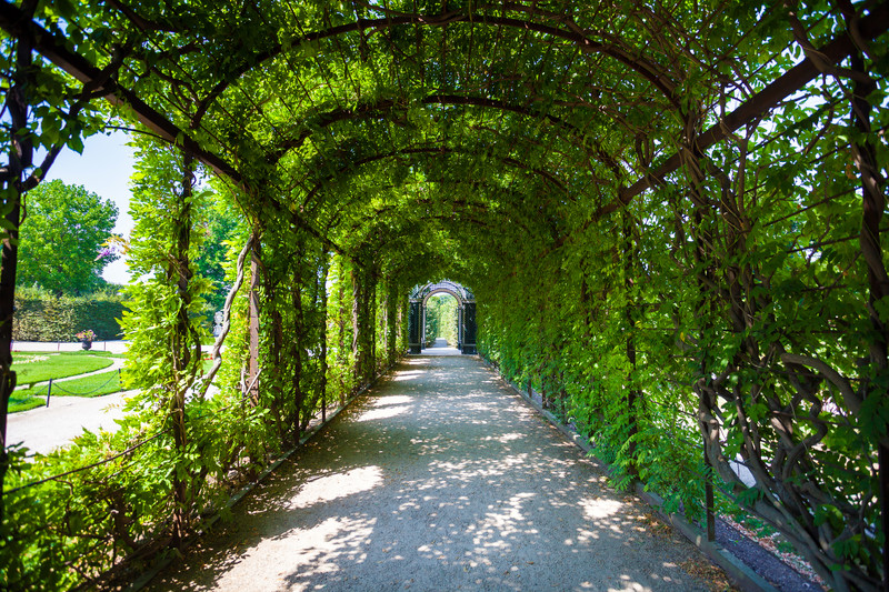 A walkway underneath a tunnel covered with greenery.